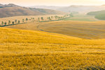 Tuscany gold fields